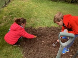 Grow radishes. Two kids planting in the garden using tools.