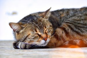Take a nap - image of a cat napping.