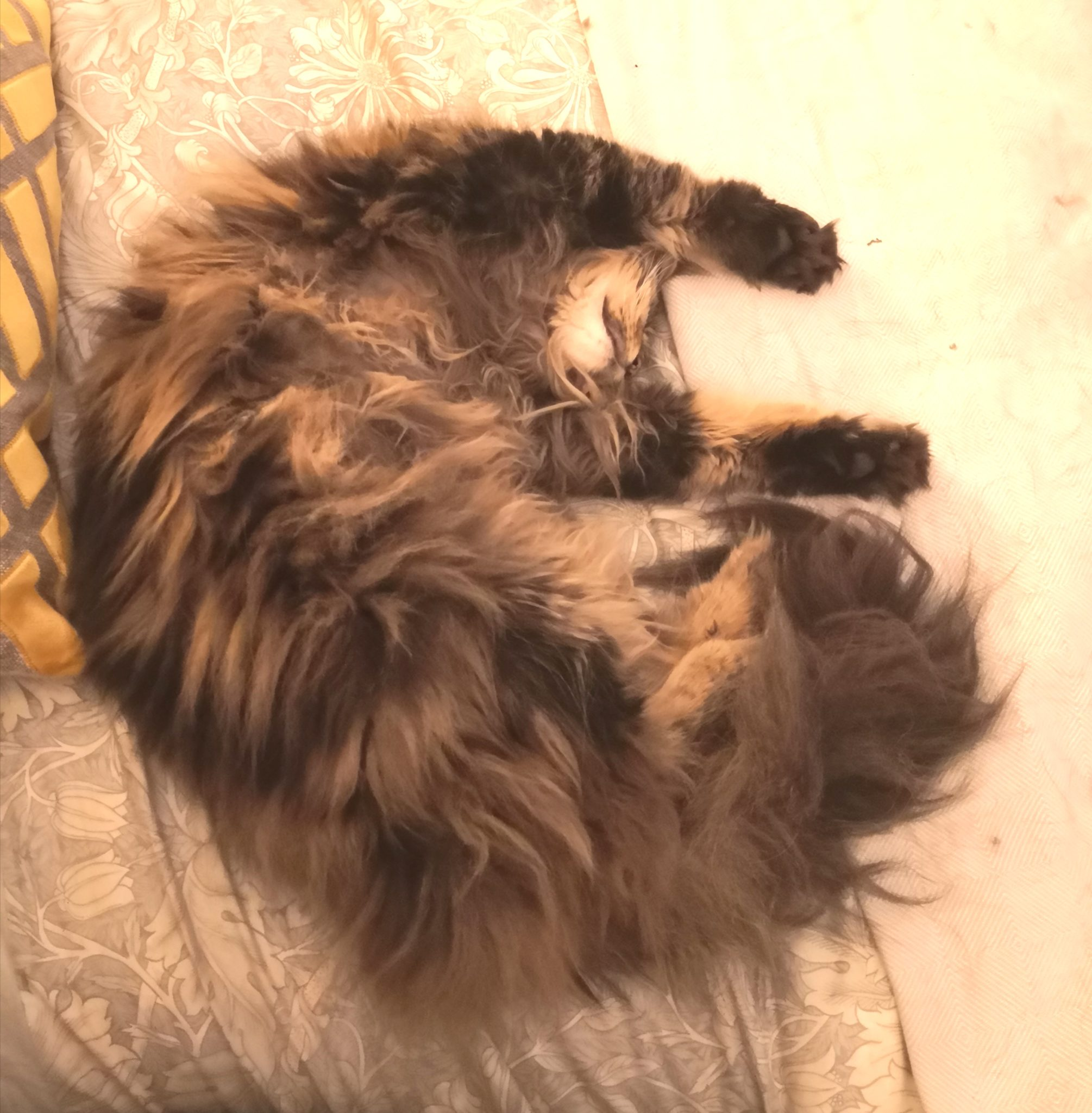 brush your cat - photo of long-haired cat curled up on a bed