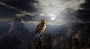 illustration of owl perched on a branch with the moon behind it