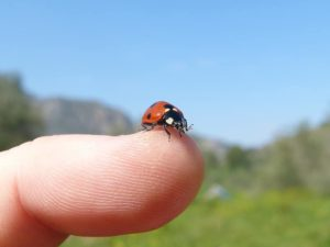 Go on a bug hunt - image of child's finger with a ladybird on the end of it.
