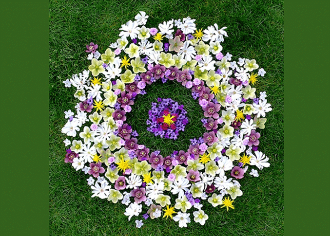 flower mandala - mandala design made out of real yellow, white, and purple flowers.