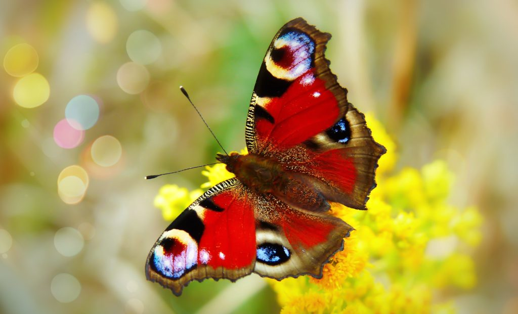 Create a butterfly garden - image of butterfly.
