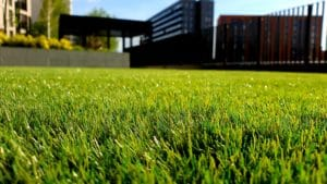 Lawn care tips. Green lawn with a an apartment block in the background.